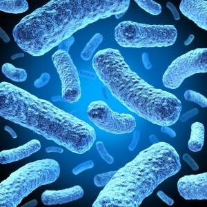 """<img src=""""e-coli.jpg"""" alt=""""e-coli picture"""">"""